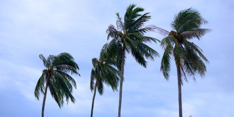 Alerte cyclonique: maîtrisez-vous les niveaux d'alerte ?