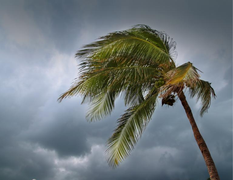 Saison cyclonique 2021 : Comment bien se préparer ?